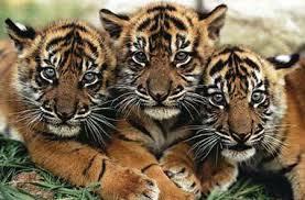 Paket Wisata Bromo Taman Safari Prigen 2 Hari 1 Malam